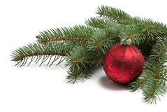 Couvert de branche d'un arbre de Noël et d'une boule rouge brillante i Photos stock