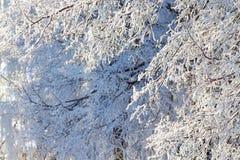 Couvert de branches d'arbre de gelée, day_ ensoleillé d'hiver d'espace libre Photographie stock libre de droits