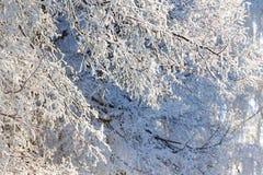 Couvert de branches d'arbre de gelée, day_ ensoleillé d'hiver d'espace libre Images stock