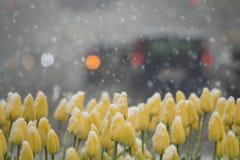 couvert de neige photographie stock libre de droits
