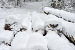 couvert de neige ouvre une session la forêt en hiver image stock