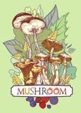 Couverture comestible de champignon illustration libre de droits