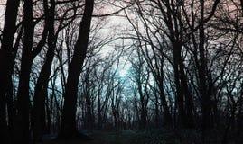 Couverture d'album de musique en métal, forêt rêveuse profonde Photographie stock