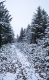 Couverture de chemin forestier dans la neige Images stock