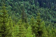 Couverture de forêt Photographie stock libre de droits