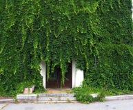 Couverture de lit verte d'un lierre Image stock