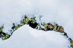 Couverture de Milou sur le fond créatif de végétation verte Image stock