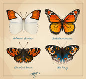 Couverture de papillons de vintage de vecteur Conception à imprimer Art imprimable pour la carte postale Photos stock