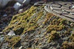 Couverture de trou d'homme couverte par mousse verte en parc image stock