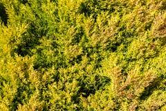Couverture verte de végétation Photographie stock libre de droits