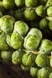 Couves-de-Bruxelas orgânicas verdes cruas Imagens de Stock