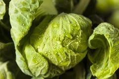 Couves-de-Bruxelas orgânicas verdes cruas Imagem de Stock