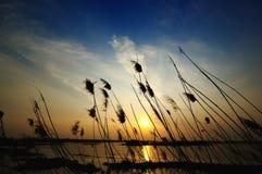 couvre de chaume le coucher du soleil Image libre de droits