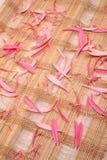 Couvre-tapis avec les pétales roses Photos libres de droits
