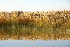 Couvrez de chaume les marais avec de l'eau Photographie stock