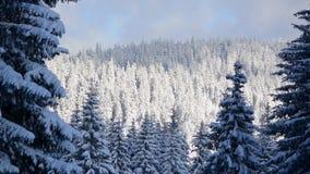 Όμορφο χειμερινό τοπίο στο βουνό Δάσος με τα δέντρα στο χιόνι την ηλιόλουστη χειμερινή ημέρα φυσική άποψη των χιονωδών δασικών δέ απόθεμα βίντεο