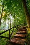 Covadonga forest stairs in Asturias Picos Europa. Mountains Spain stock images