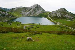 Covadonga valley in spain Royalty Free Stock Photo