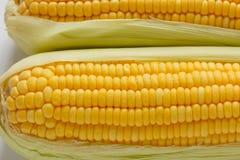 Covata del cereale molle due. Fotografia Stock Libera da Diritti