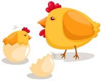 Covata del pollo Fotografie Stock Libere da Diritti