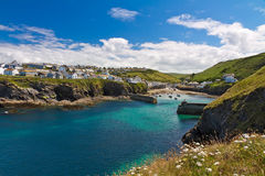 Cove and harbour of Port Isaac, Cornwall, England. Cove and harbour of Port Isaac with white flowers, Cornwall, England Royalty Free Stock Photography