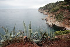 A Cove in Southern Spain. Some Aloe Vera in the foreground on a summers day in balmy Spain Stock Photography