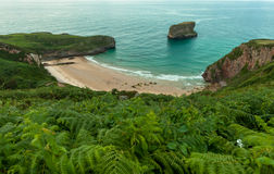 Cove and vegetation Stock Photos