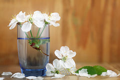 Covenants cherry fragrance perfume Royalty Free Stock Images