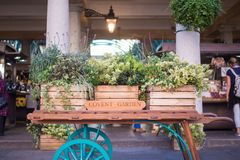 Covent Garden Apple Market London, trolley with plants and herbs. London Covent garden apple market, one of the most attractive areas of the town. Gardener stock image