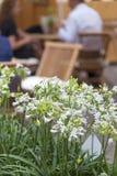 Covent ogródu rynek, popularny zakupy i atrakcja turystyczna, kwiat dekoracja na ulicie, Londyn, Zjednoczone Królestwo Fotografia Royalty Free