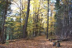 Coventry Trail. In Terra Cota Conservation Area. Maple and Pines Royalty Free Stock Photo