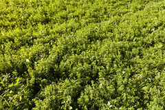 Cover Crop Background Stock Images
