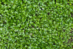 Cover crop Royalty Free Stock Image
