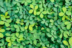 Cover of fresh bright green plants for wallpaper. Organic vibes stock photography