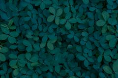 Cover of fresh green plants at night for wallpaper. With space for inscriptions royalty free stock photography