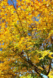 Cover of leaves in the autumn park Royalty Free Stock Images