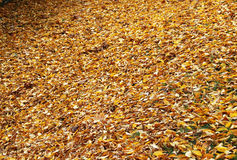 Cover of leaves in the autumn park Royalty Free Stock Photos