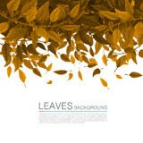 Cover orange leaves on a white background Royalty Free Stock Photo