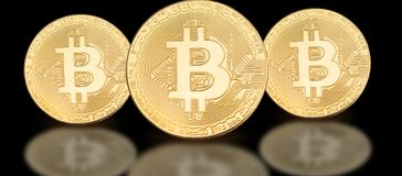 Cover photo for social media profile: a set of bitcoins on a solid background. With beautiful reflection Royalty Free Stock Image
