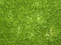 Cover of vegetation Royalty Free Stock Image