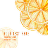 Cover with watercolor vector oranges Stock Image