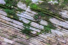 Coverd мха на каменной текстуре в лесе стоковое изображение rf