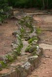 Coverd del muschio su struttura di pietra in foresta fotografie stock