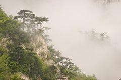 Coverd Mediterraneo della flora della montagna con nebbia Immagini Stock