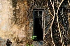 Coverd velho da parede da janela de dano por raizes baniyan da árvore fotografia de stock royalty free