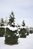 coverded snowtrees Arkivbilder