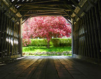Covered Bridge. In New Hampshire with Spring tree at the end Royalty Free Stock Image