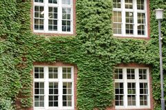 Covered Building. A building covered by ivy plants, to highlight a classic style Stock Photography