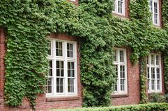Covered Building. A building covered by ivy plants, to highlight a classic style Stock Photo