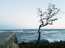 Tree without life, dressed by the drops of the ocean royalty free stock photography